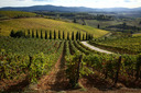 CHIANTI and SAN GIMIGNANO GRAND TOUR (GT-BUS)